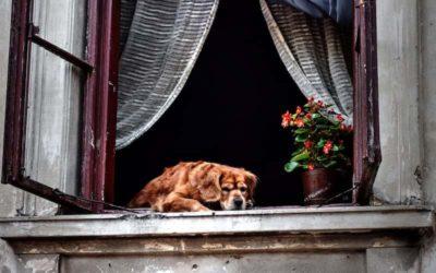 7 Razas de Perros Pequeños para Departamentos