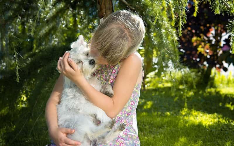 5 Razas de Perros Pequeños para Niños