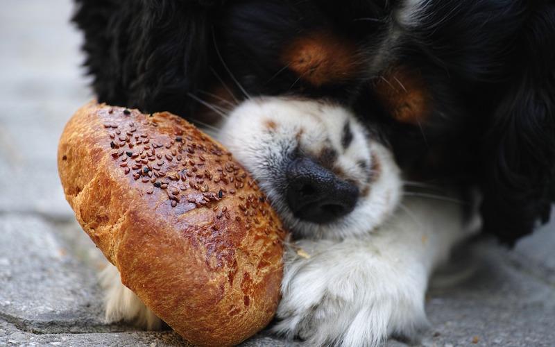 Alimentos peligrosos para perros.