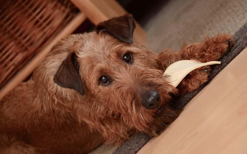 Alimentos no aptos para perros.