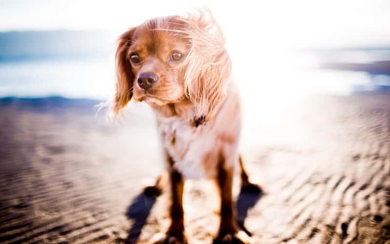 Protege a tus mascotas del calor.