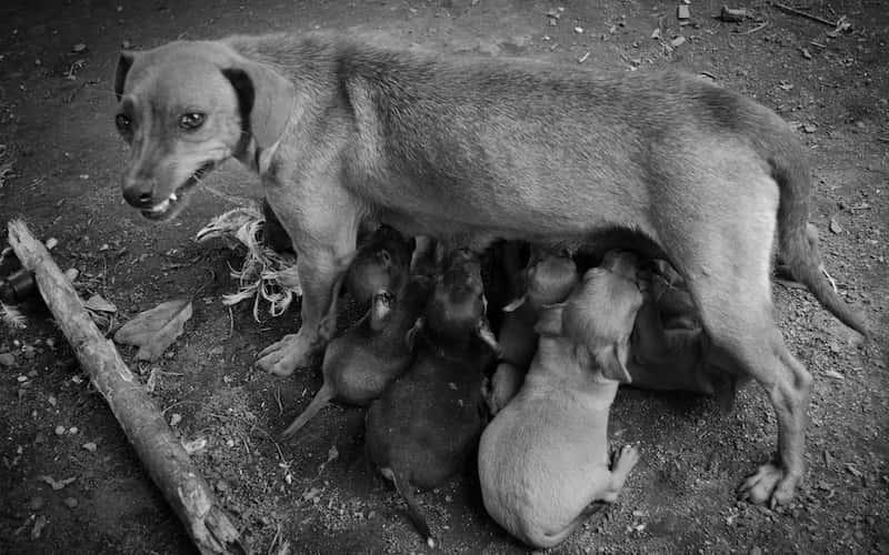 Población de perros de la calle.