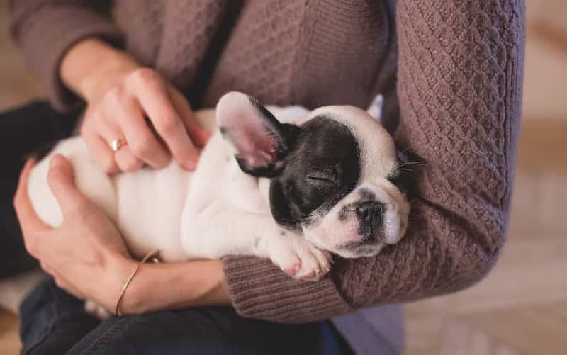 Cómo relajar a un perro.