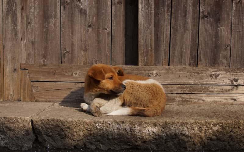 Adopción de mascotas.