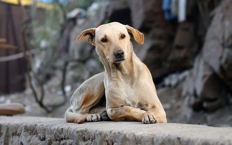 Perros en Situación de Calle