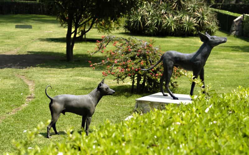 perro Xoloitzcuintle.