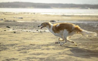 Razas de Perros Peludos Grandes